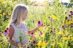 Растение с фиолетовыми цветами полевое – Луговые и полевые цветы: фото и названия растений